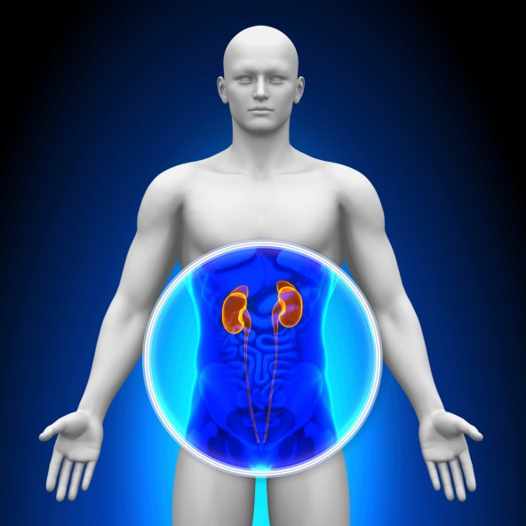 Lifetime Risk of Chronic Kidney Disease High in U.S.