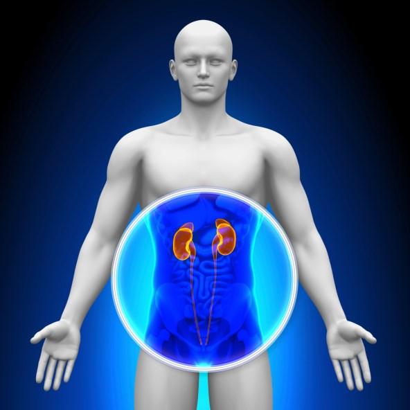 Lifetime Risk of Chronic Kidney Disease High in U.S.