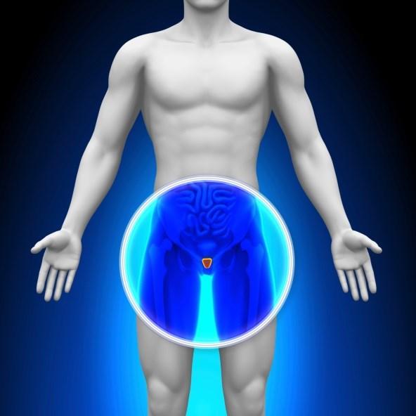 Small Prostates Predict More Severe BOO Symptoms