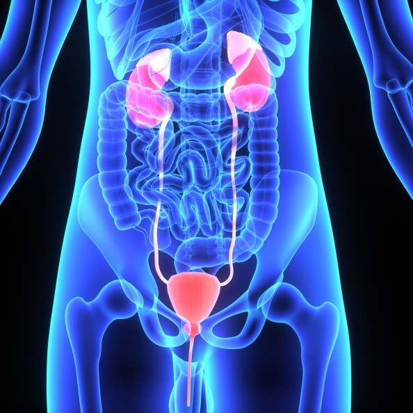 It offers better recurrence-free survival than BCG in patients with papillary intermediate- and high-risk non-muscle-invasive bladder cancer.
