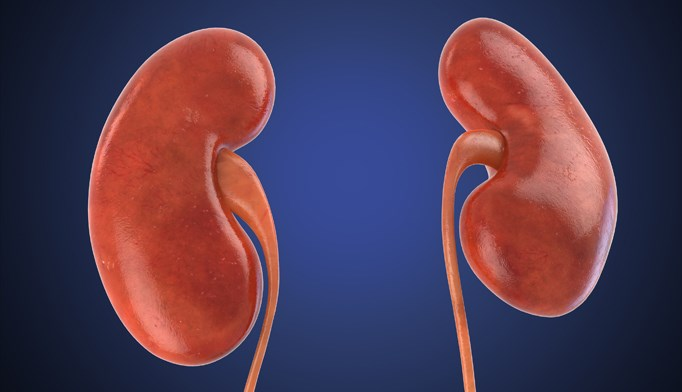 More Intensive Renal Replacement Therapy Possibly Harmful