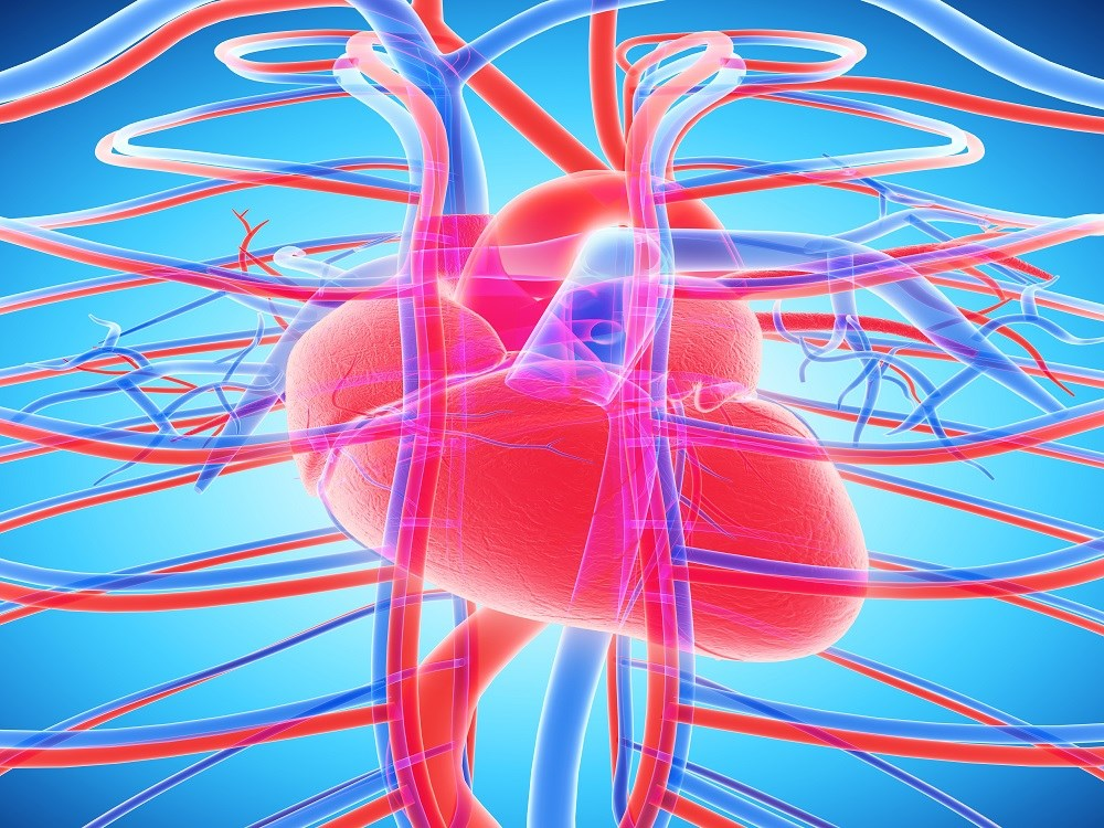 High Triglycerides, Low HDL-C Increase CHD, Stroke Risks