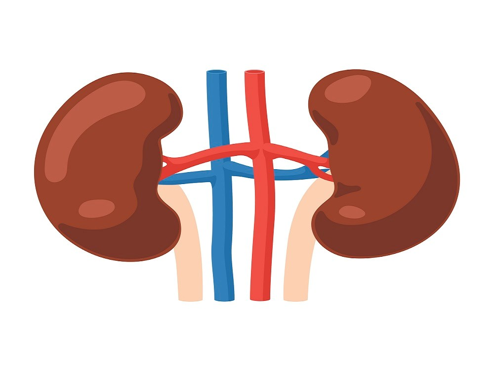 Anthropometric Body Fat Measurements Can Estimate Renal Function Decline