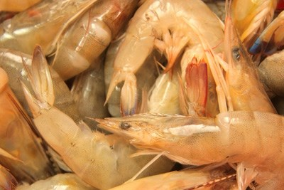 Excess consumption of iron-rich foods such as shellfish could increase the risk of gout, according to new research.