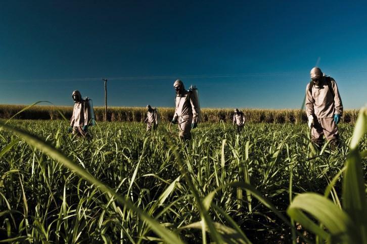 Acute Renal Dysfunction Linked to Sugarcane Harvesting