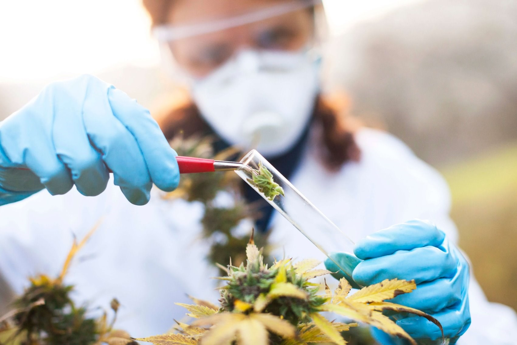 """The FDA still considers marijuana as a Schedule 1 drug, meaning it has """"no currently accepted medical use and a high potential for abuse."""""""