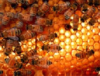 In a small study, sunitinib recipients who took royal jelly, a substance produced by worker honeybees, were less likely to experience fatigue and anorexia than those who took placebo.